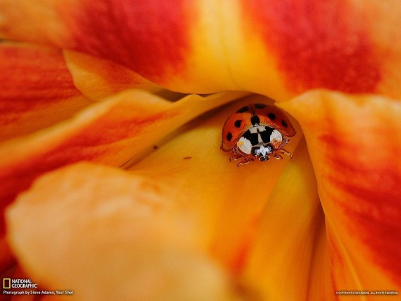 National Geographic, January 2013 - Page 2 1359319052_1359290311_1359229064_51_zps1017a046