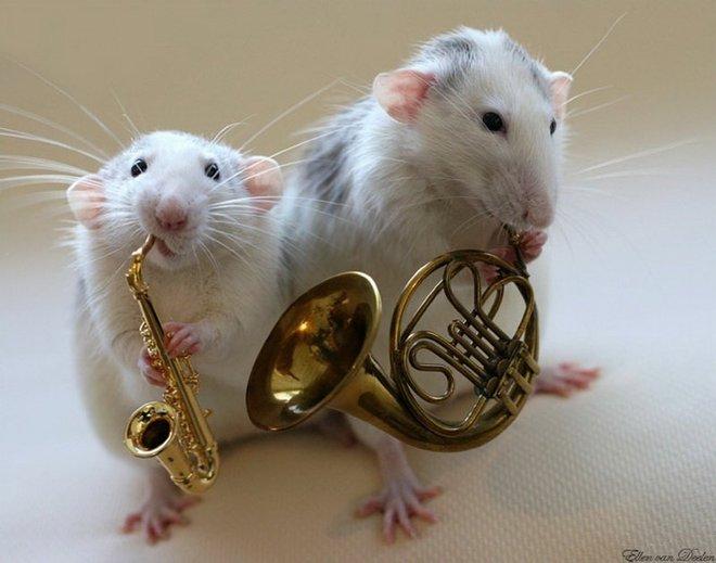 Nhiếp ảnh gia Ellen van Dilen - mouse with the musics 0_a4b09_90a282fc_orig_zpse333ee12