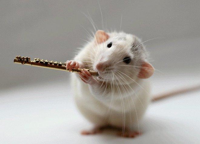 Nhiếp ảnh gia Ellen van Dilen - mouse with the musics 0_a4b0a_6fb3b3b8_orig_zps70a56b63