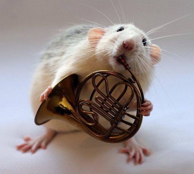 Nhiếp ảnh gia Ellen van Dilen - mouse with the musics 0_a4b0b_3750f5ac_orig_zpse6f0fa97