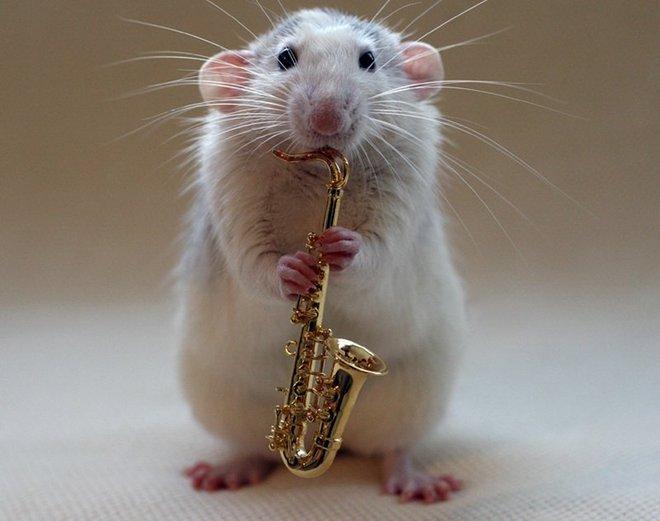 Nhiếp ảnh gia Ellen van Dilen - mouse with the musics 0_a4b0c_685257c7_orig_zps8bde07ed
