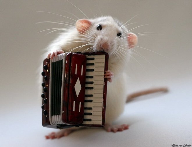 Nhiếp ảnh gia Ellen van Dilen - mouse with the musics 0_a4b0d_ab91f31f_orig_zpsc50c1efc