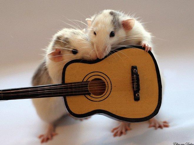 Nhiếp ảnh gia Ellen van Dilen - mouse with the musics 0_a4b0e_d21ba58e_orig_zps02ad0ac4