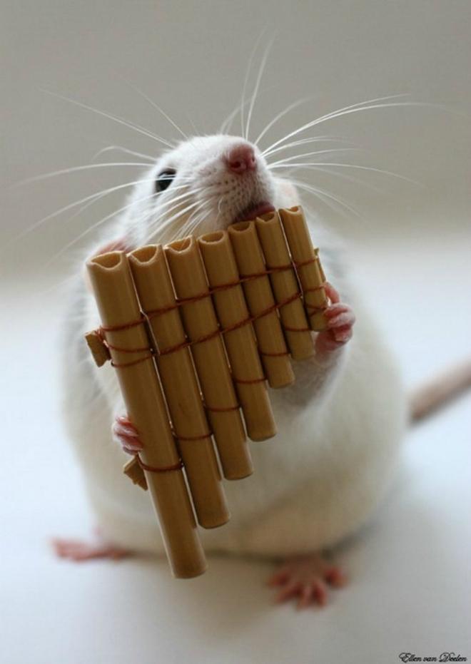 Nhiếp ảnh gia Ellen van Dilen - mouse with the musics 0_a4b0f_31b1c5e5_orig_zpsd99763e1