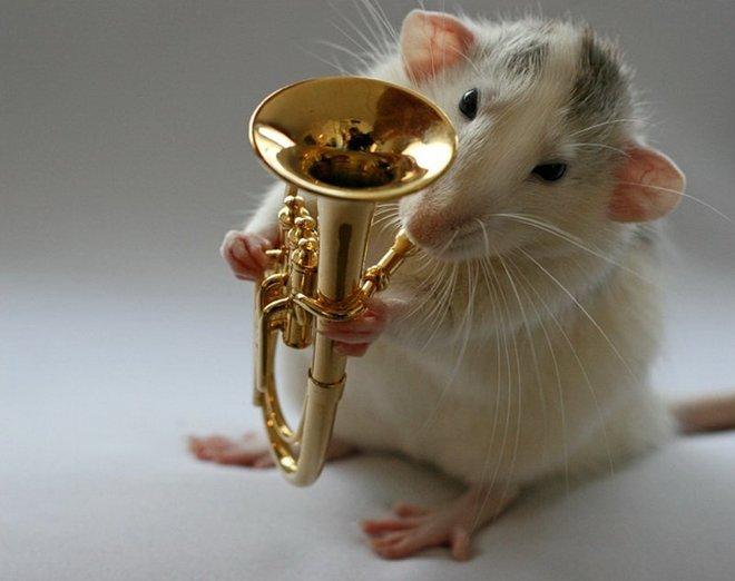 Nhiếp ảnh gia Ellen van Dilen - mouse with the musics 0_a4b10_8983ae8a_orig_zpsfbfb120f