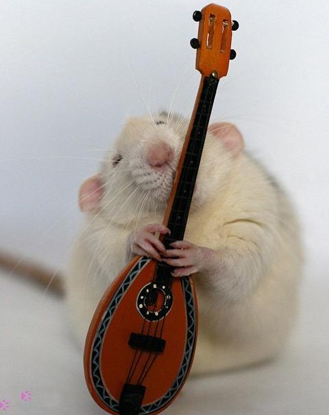 Nhiếp ảnh gia Ellen van Dilen - mouse with the musics 0_a4b11_acd79cc5_orig_zps8ff78b83