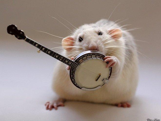 Nhiếp ảnh gia Ellen van Dilen - mouse with the musics 0_a4b12_d2490a8c_orig_zps74db0d7e