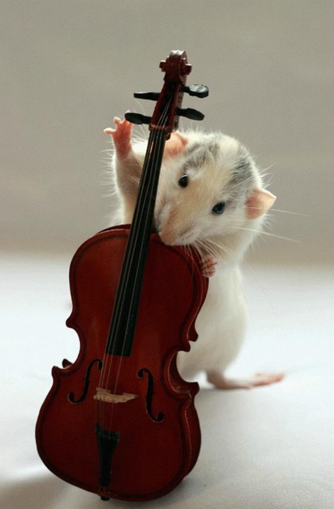 Nhiếp ảnh gia Ellen van Dilen - mouse with the musics 0_a4b13_54f05745_orig_zps5715959b