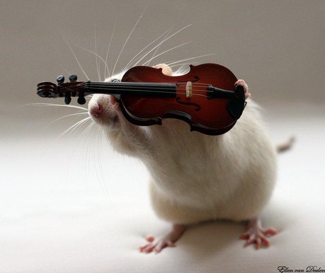 Nhiếp ảnh gia Ellen van Dilen - mouse with the musics 0_a4b14_718fc82f_orig_zpsc1fefc27