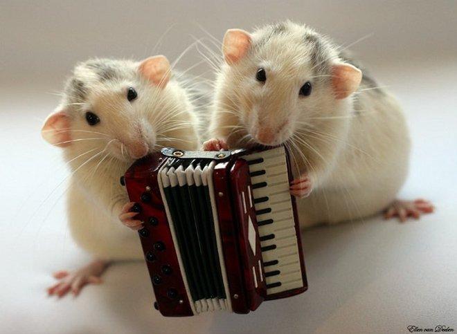 Nhiếp ảnh gia Ellen van Dilen - mouse with the musics 0_a4b16_ef61a549_orig_zps3784783f