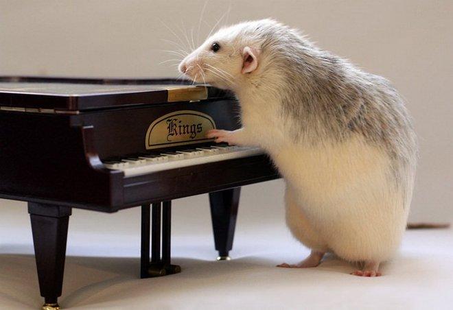 Nhiếp ảnh gia Ellen van Dilen - mouse with the musics 0_a4b17_b4252186_orig_zps68224863