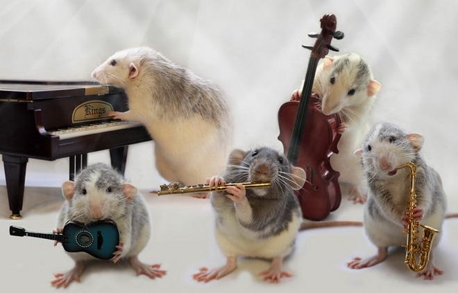 Nhiếp ảnh gia Ellen van Dilen - mouse with the musics 0_a4b18_3f918177_orig_zps1d173c5c