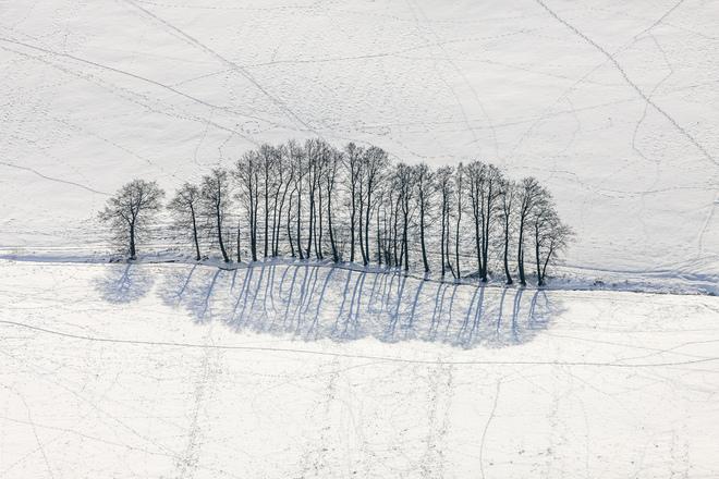 Cây mùa đông 0_a536c_9d25e3c5_orig_zps239936c2