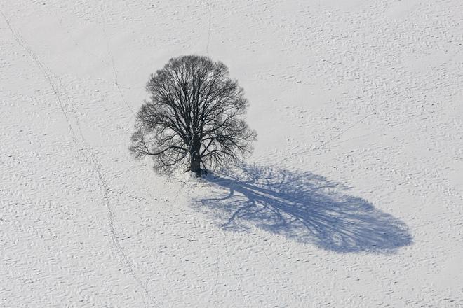 Cây mùa đông 0_a536d_144e07db_orig_zps1e9f122a