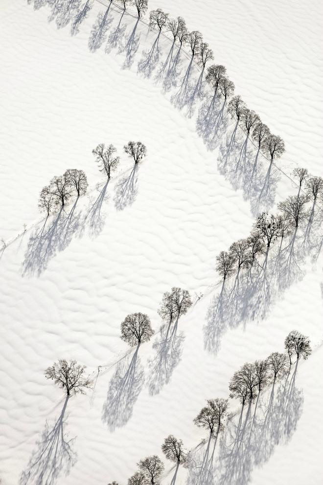 Cây mùa đông 0_a536f_ca31b3dc_orig_zpsbcb48cc6