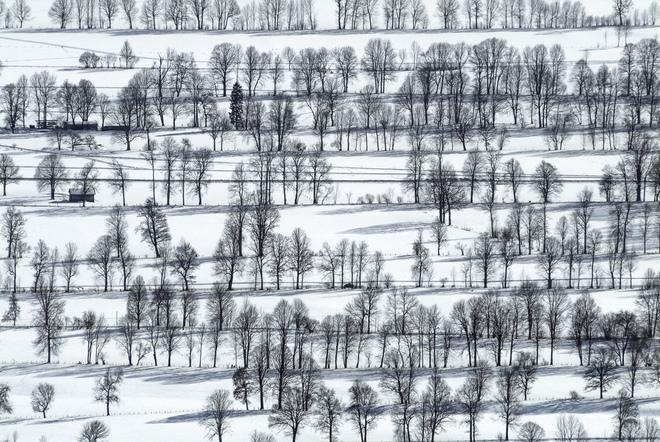 Cây mùa đông 0_a5370_d44792dc_orig_zpsb67d38bb