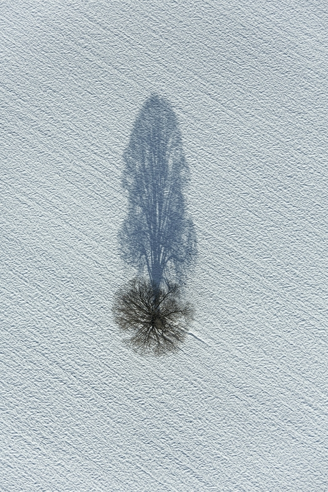 Cây mùa đông 0_a5371_798d3d64_orig_zpsaf3525bc