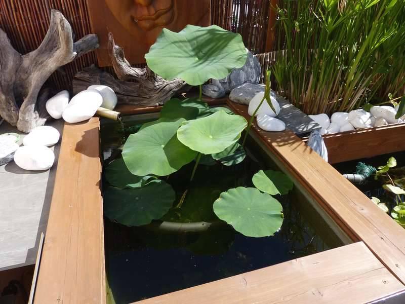 Bassin hors-sol de terrasse de Patrice_B - Page 3 Lotus_2_zpsky2c9qmk