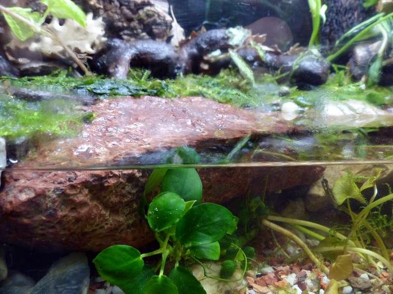 Paludarium pour crabes Geosesarma de Patrice_B Terra_01_12_a_zpsd8f1b54a