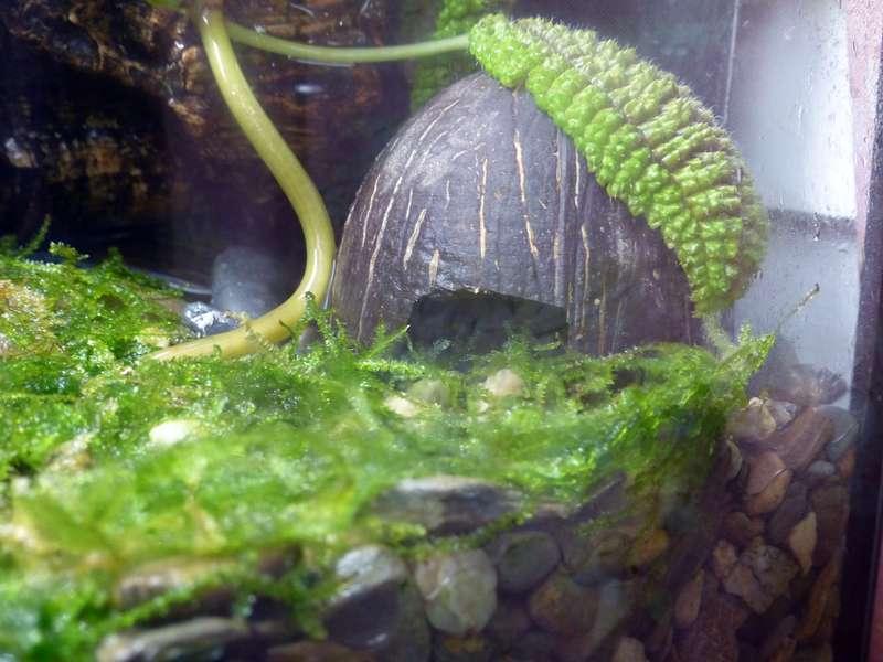 Paludarium pour crabes Geosesarma de Patrice_B Terra_01_12_c_zps929a2d03