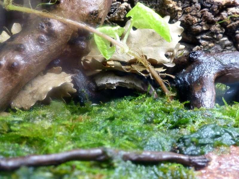 Paludarium pour crabes Geosesarma de Patrice_B Terra_01_12_d_zpsf8ebb4e4