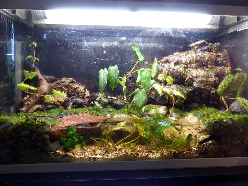 Paludarium pour crabes Geosesarma de Patrice_B Terra_01_12_e_zpsb5f85e69