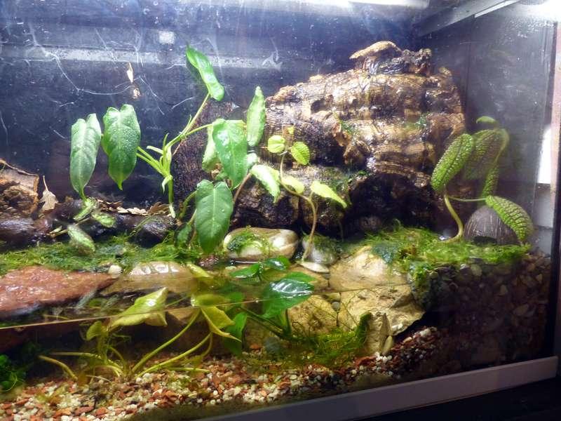 Paludarium pour crabes Geosesarma de Patrice_B Terra_01_12_f_zps76229316