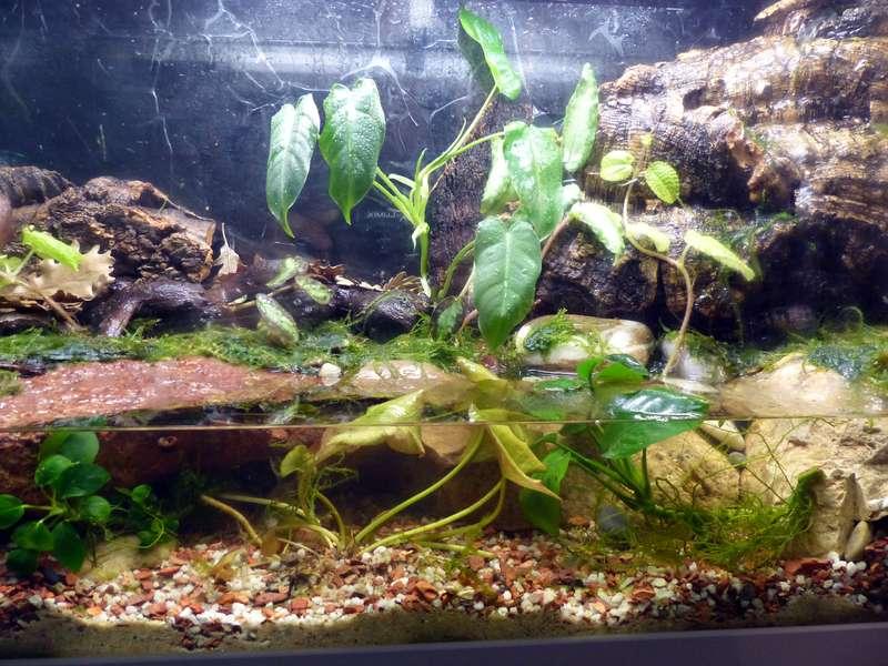 Paludarium pour crabes Geosesarma de Patrice_B Terra_01_12_g_zpsd06305fa