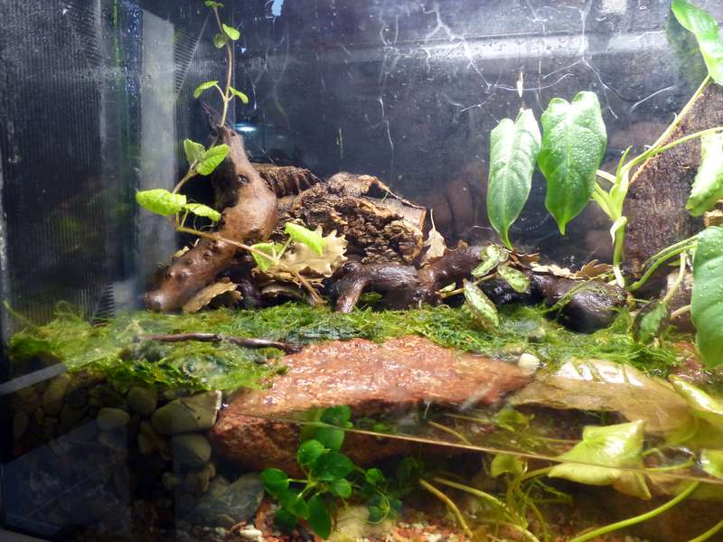 Paludarium pour crabes Geosesarma de Patrice_B Terra_01_12_h_zpsf729a975