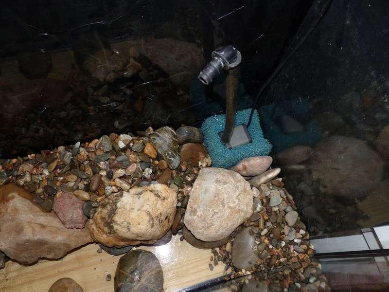 Paludarium pour crabes Geosesarma de Patrice_B Terra_1_zpsb7e0da8a