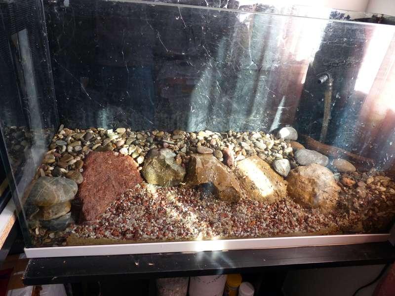 Paludarium pour crabes Geosesarma de Patrice_B Terra_4_zpsa4fc6c26
