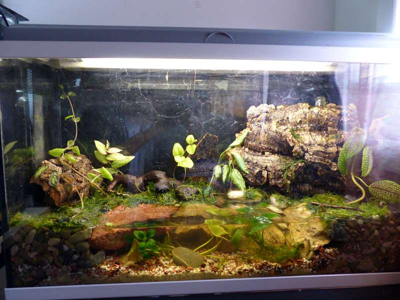 Paludarium pour crabes Geosesarma de Patrice_B Terra_5_zpsefa6f74e