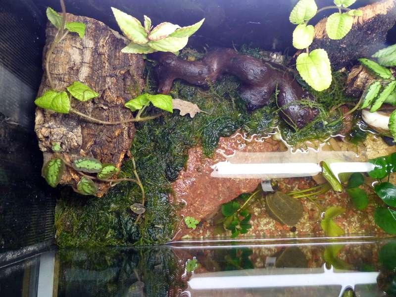 Paludarium pour crabes Geosesarma de Patrice_B Terra_8_zps8a4fd13a