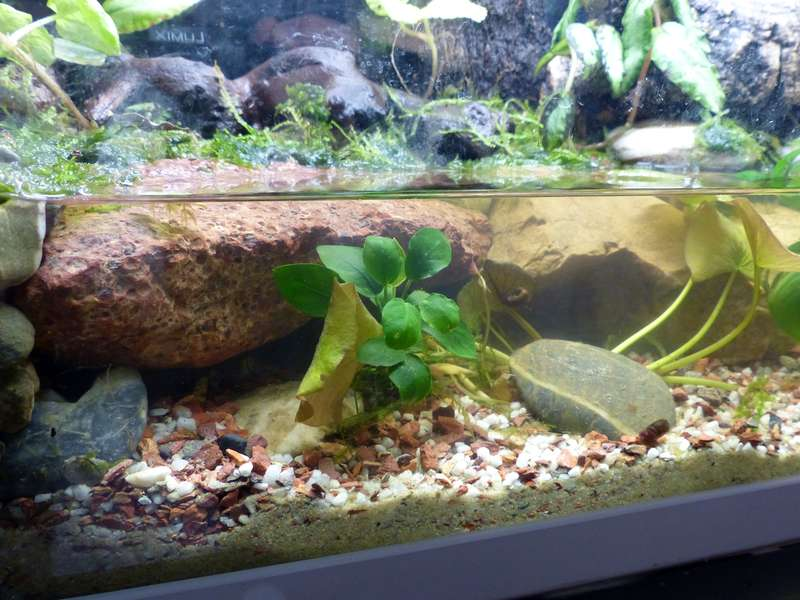 Paludarium pour crabes Geosesarma de Patrice_B Terra_a_zps8590a0ba