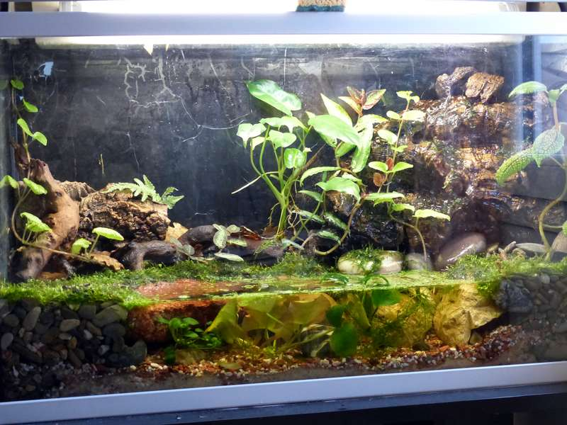 Paludarium pour crabes Geosesarma de Patrice_B Palu_3_zps69d59fd3