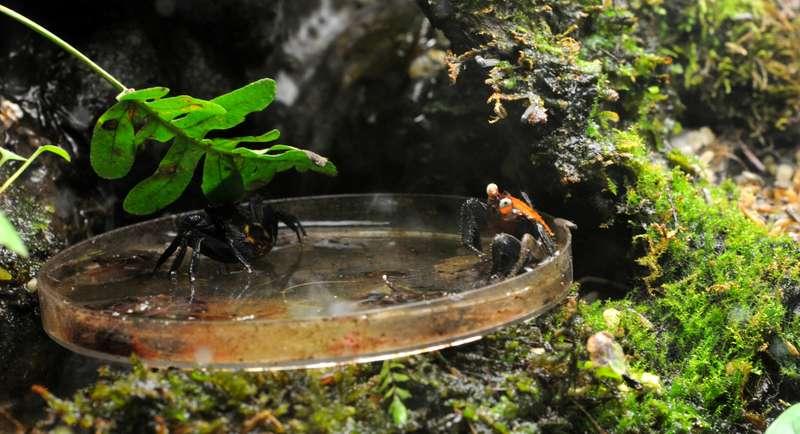 Terrarium pour Crabes Geosesarma de Patrice_B A_table_1_zpse97e8838