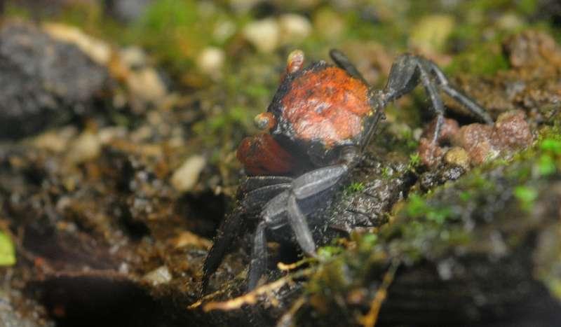 Terrarium pour Crabes Geosesarma de Patrice_B Orange_1_zps5ba181d4