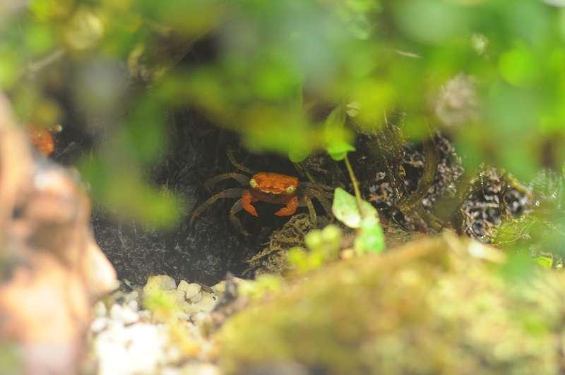 Terrarium (aquaterrarium) pour Crabes Geosesarma de Patrice_B Dans_terra_1_zpsecf46d18
