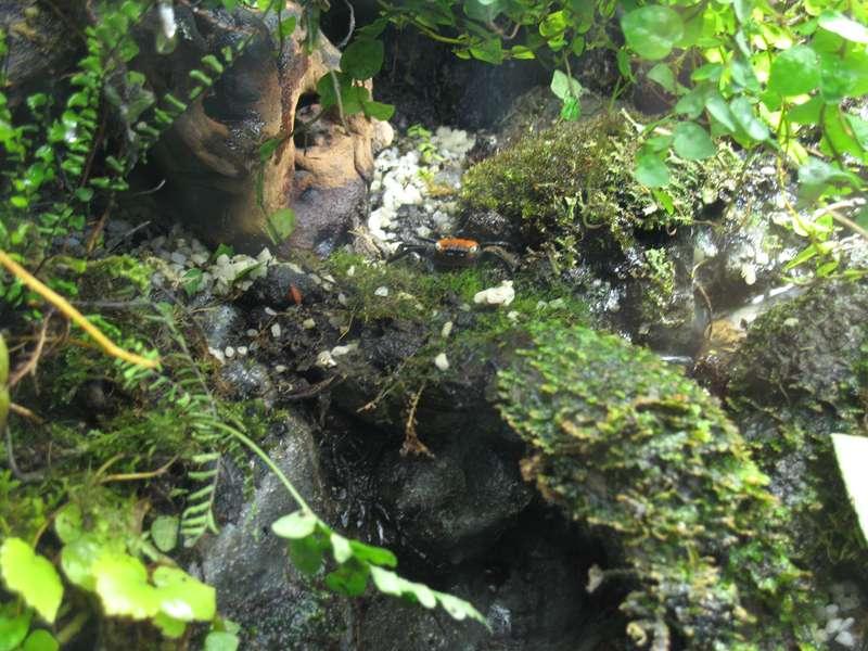 Terrarium (aquaterrarium) pour Crabes Geosesarma de Patrice_B Dans_terra_3_zpsf2933d1f