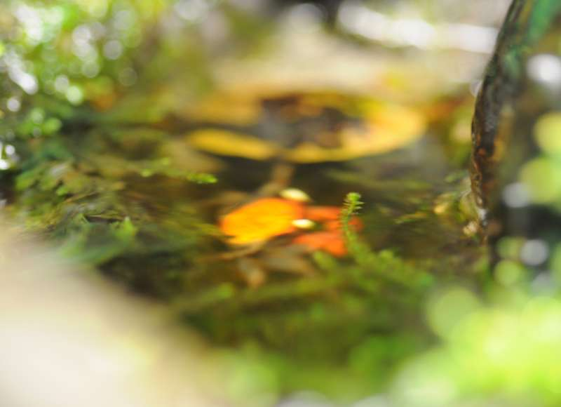 Terrarium (aquaterrarium) pour Crabes Geosesarma de Patrice_B Sous_eau_zps56c45724