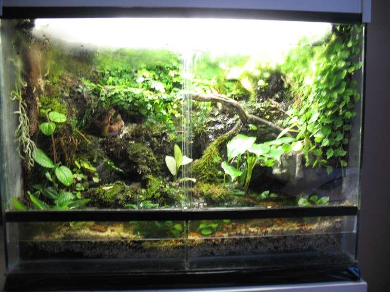 Terrarium (aquaterrarium) pour Crabes Geosesarma de Patrice_B Terra_1_zps84eea4c2