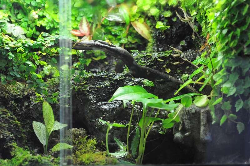 Terrarium (aquaterrarium) pour Crabes Geosesarma de Patrice_B Terra_4_zps2e6337e8