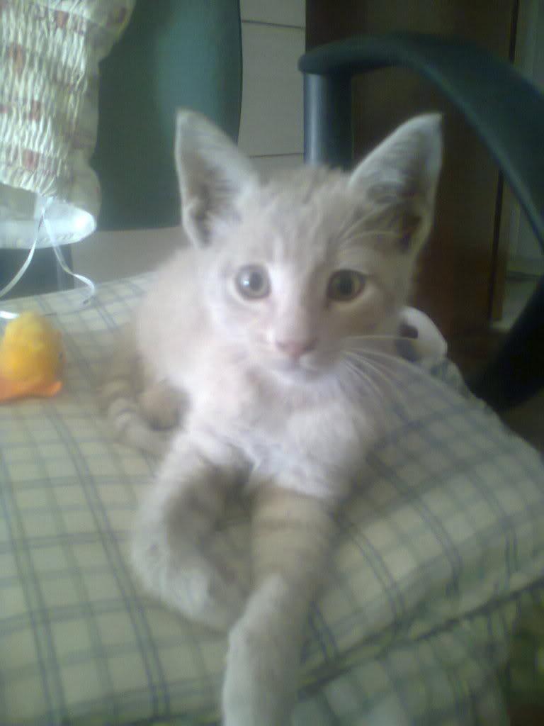 Χαρίζεται αρσενικό γατάκι 1,5 μηνών 0155_zpsefaaeab2