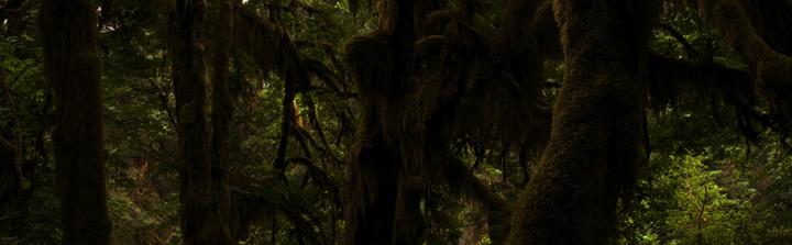[Rol - Actualización final] Mundo vacío - Página 2 Hoh-rainforest_1Aug08_3082-83_zps27b4c5ef