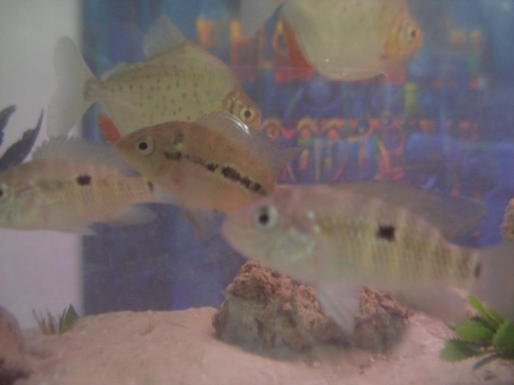 holas saludos de la casa acuario DSC04305_zpsa5ac4d53