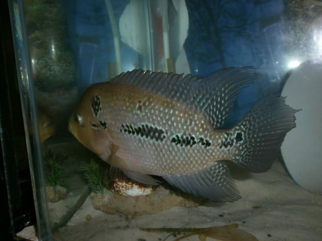 holas saludos de la casa acuario P1310301_zpsdab6e222