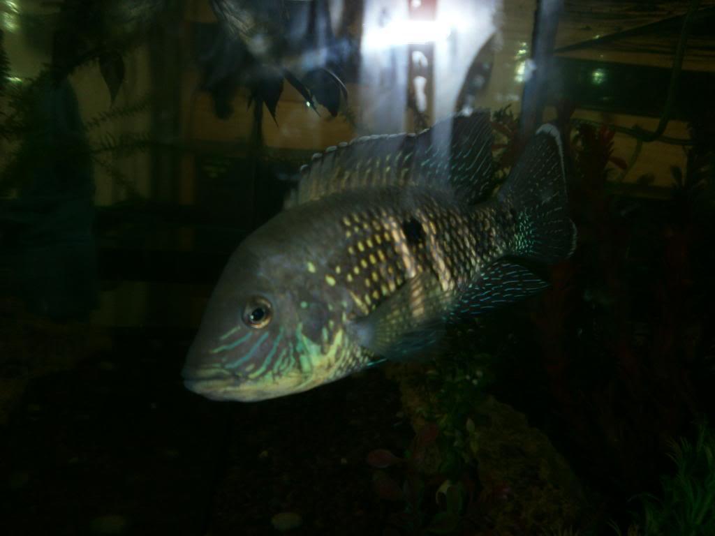 holas saludos de la casa acuario P1310314_zpscbaebf8a