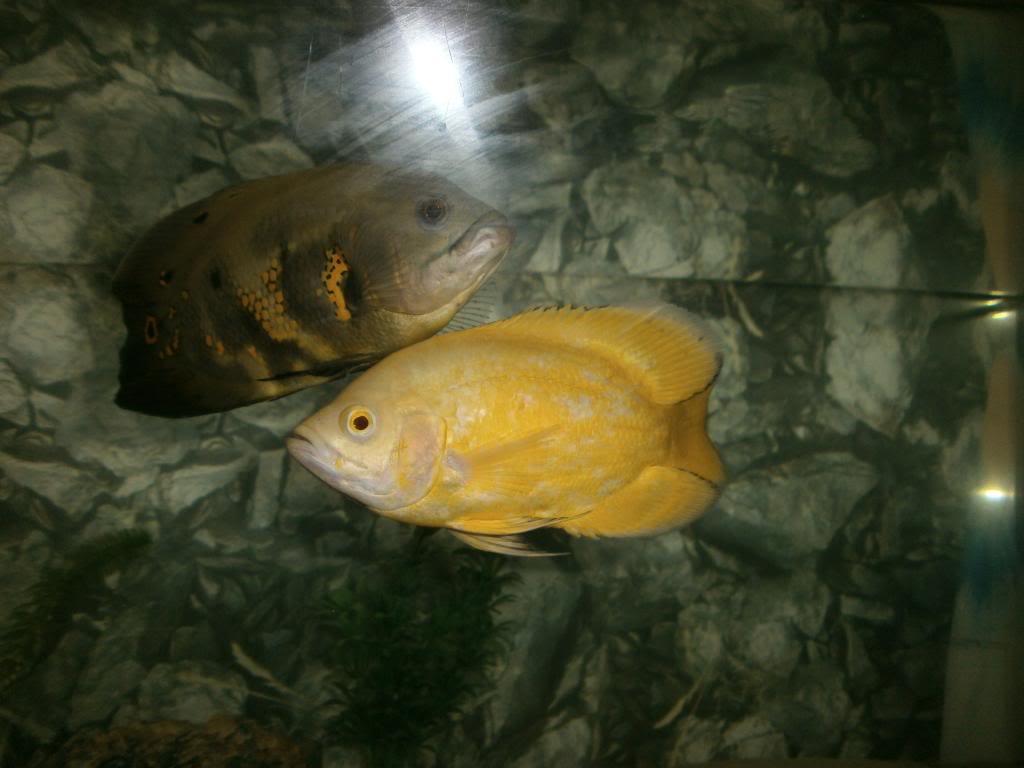holas saludos de la casa acuario P1310328_zps41b339cc