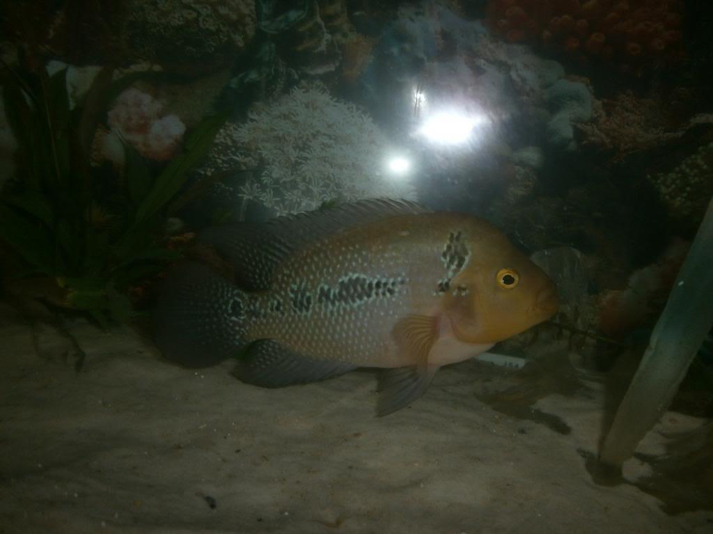 holas saludos de la casa acuario P1310334_zpsffdca357