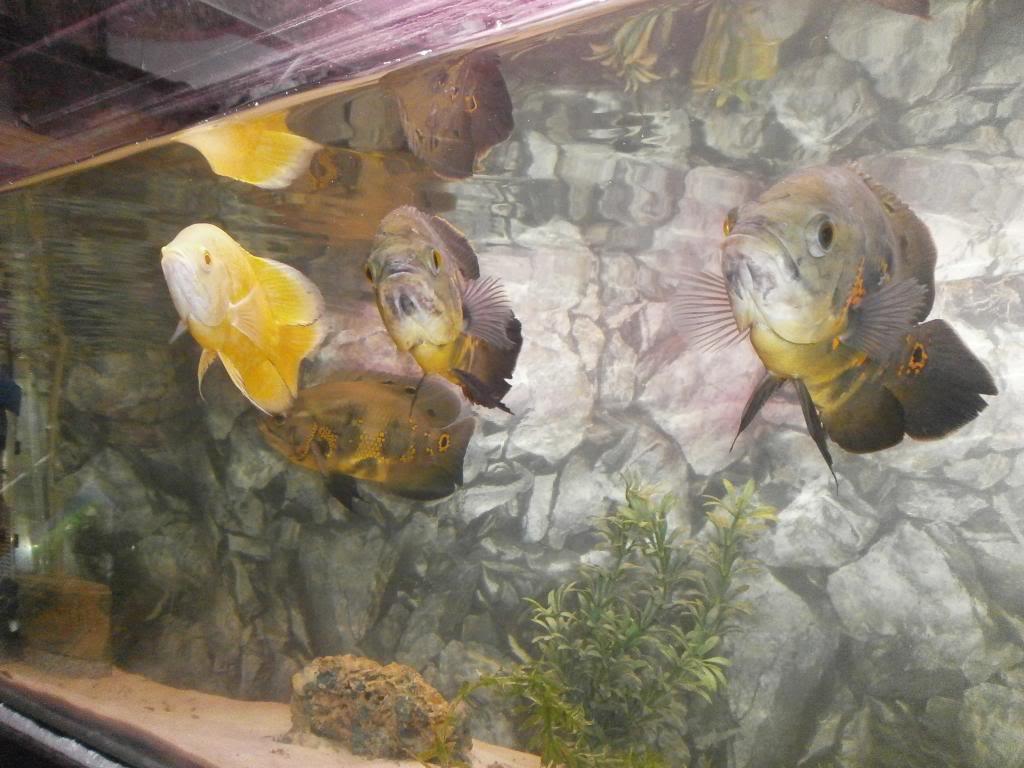 holas saludos de la casa acuario P2090496_zpsb11fae7e